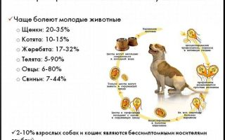 Лямблии у собак – симптомы и лечение