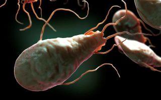 Как обнаружить лямблии в организме человека