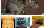 Самые эффективные средства от крыс и мышей