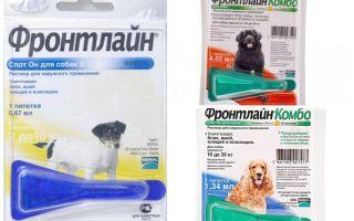 Фронтлайн капли для собак: инструкция по применению и отзывы