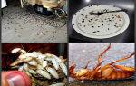 Как и чем травить тараканов в квартире самостоятельно