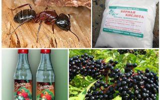 Эффективные народные средства от муравьев