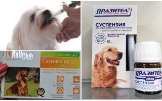 Лучшие средства от глистов для собак
