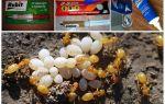 Эффективные средства от муравьев