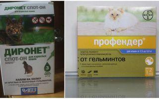 Капли от глистов для кошек на холку – обзор, отзывы, цены