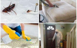 Чем обработать квартиру от блох животных