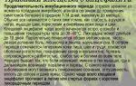 Лук от глистов и других паразитов – отзывы, рецепты, применение