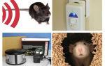 Чего боятся мыши — народные средства