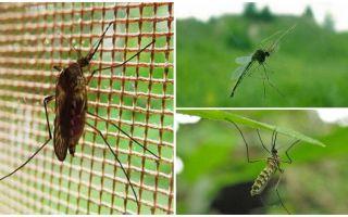 До какого этажа долетают комары и мухи