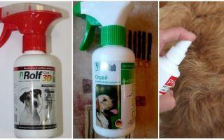 Чем и как вывести блох у собаки в домашних условиях — средства от блох