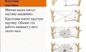 Как паук плетет паутину, детальное описание