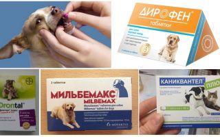Лучшие таблетки от глистов для собак