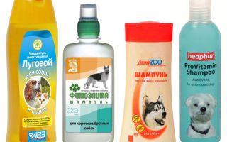 Шампунь от блох для собак — отзывы и советы по применению
