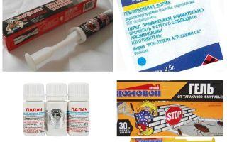 Фипронил от тараканов — отзывы и инструкция по применению
