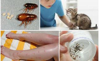 Можно ли заразиться глистами от кошки человеку