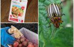 Опрыскивание и обработка картофеля от колорадского жука