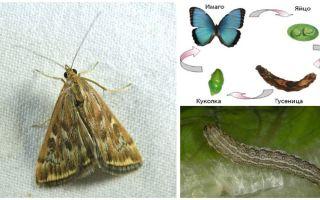 Насекомые мотыльки – фото и описание видов