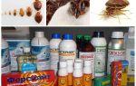 Средства от клопов без запаха в домашних условиях