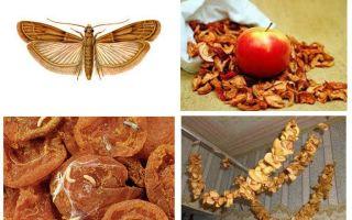Фруктовая моль: как избавиться и сохранить сухофрукты от моли