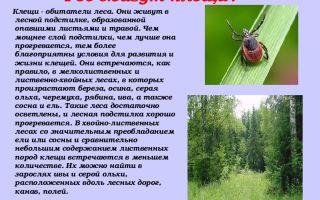 Где обитают клещи: в траве или на деревьях