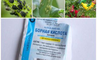 Борная кислота от тли в огороде