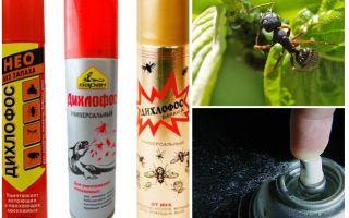 Дихлофос от муравьев в квартире отзывы и инструкция по применению