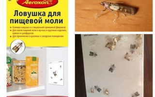 Ловушки для пищевой моли – обзор всех видов