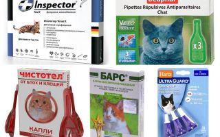 Капли от блох и глистов для кошек – обзор средств