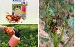 Эффективные средства от колорадского жука на картошке