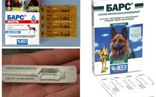 Капли барс форте для собак – инструкция по применению и отзывы