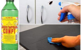 Нашатырный спирт от тараканов: рецепт и применение