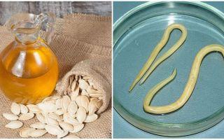 Тыквенное масло от глистов и других паразитов
