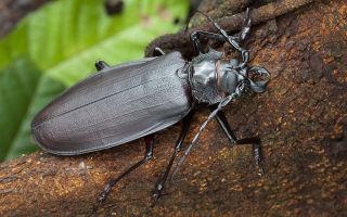 Как избавиться от муравьев на грядках в огороде народными средствами