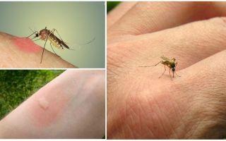 Ядовитые гусеницы – фото и описание