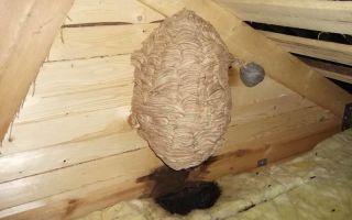 Как уничтожить гнездо шершней, фото гнезда