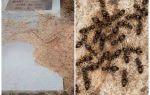 Как избавиться от муравьев на кладбище