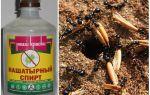 Нашатырный спирт от муравьев на огороде