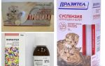Лучшие таблетки от глистов для кошек