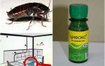 Цифокс от тараканов – отзывы и инструкция по применению