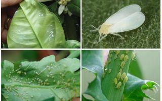 Вредители комнатных растений — фото и как с ними бороться