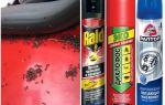 Как избавиться от муравьев в машине