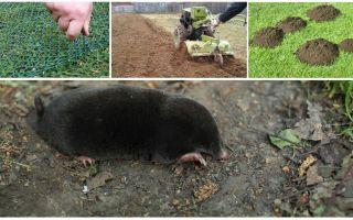 Как прогнать кротов с огорода или дачного участка