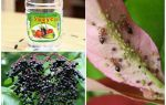 Как избавиться от муравьев на дачном участке народными средствами