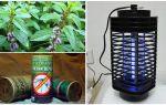 Как избавиться от мух в доме, квартире, во дворе дома