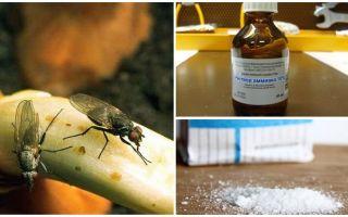 Как бороться с луковой мухой народными и магазинными средствами