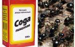 Сода от муравьев на огороде отзывы и описание