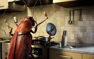 Куда ушли тараканы и почему они исчезли из квартиры