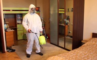 Дезинфекция от блох в квартире