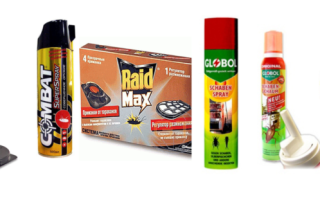 Эффективные средства от насекомых в доме или квартире
