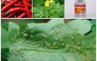 Сонет от колорадского жука – инструкция по применению, цена, отзывы